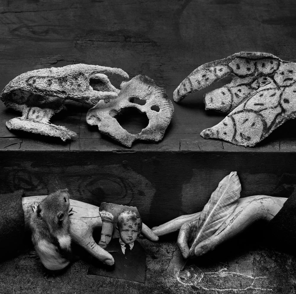 Asylum of the Birds - Complex ambiguity, 2009