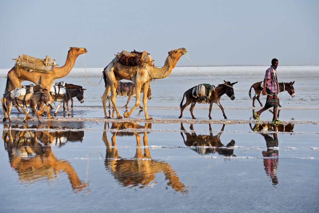 Trevor Cole, The salt trade, Donkeys and camels