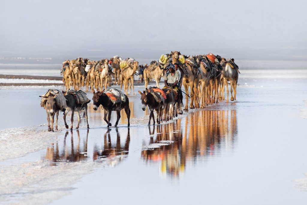 Trevor Cole, The salt trade, Caravans of donkeys and camels